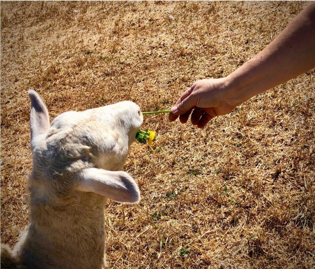 being an effective vegan
