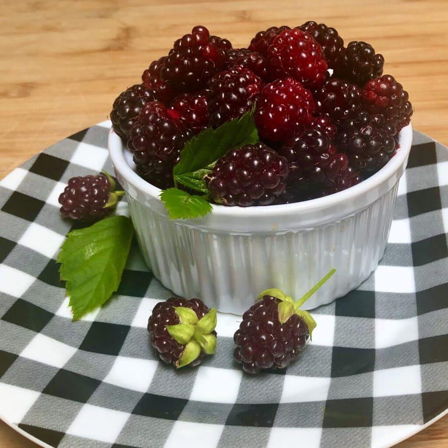 bowl of fresh boysenberries