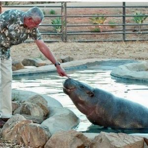 Chuck Traisi and Hannah the pygmy hippo at The Fund for Animals Wildlife Center